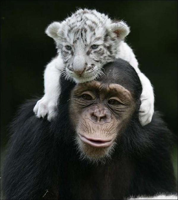 Great Unusual Friendship (1)