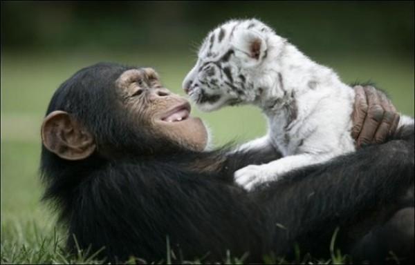Great Unusual Friendship (3)