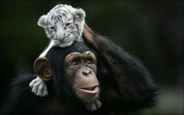 Great Unusual Friendship (4)