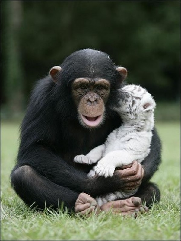 Great Unusual Friendship (6)