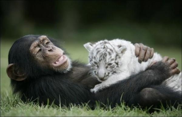 Great Unusual Friendship (7)