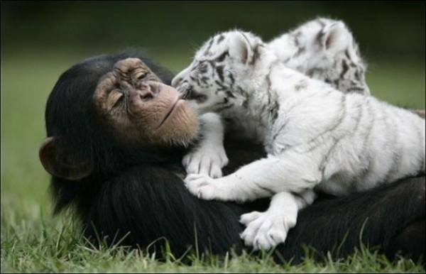 Great Unusual Friendship (9)