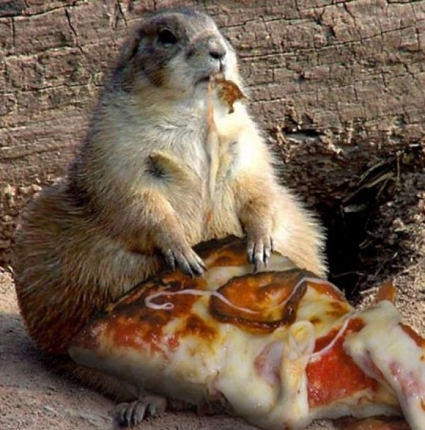 Animals That Would Thrive on a Diet (7)