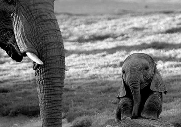 Cute Little Animals (1)