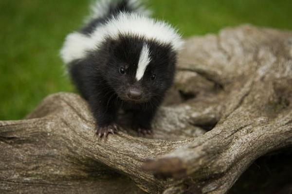 Cute Little Animals (2)