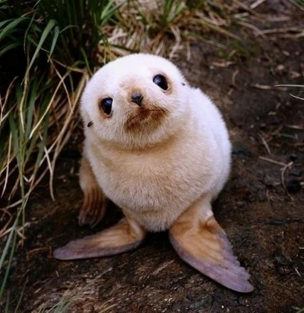 Cute Little Animals (6)