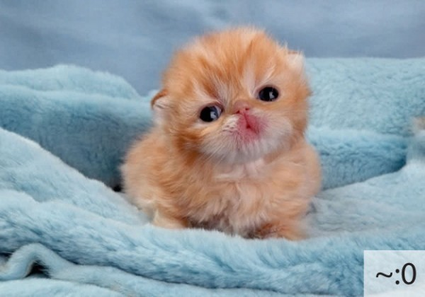 The 20 Super Cute Kittens as Emoticons (4)