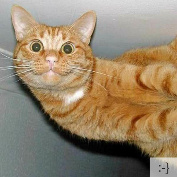 The 20 Super Cute Kittens as Emoticons (7)